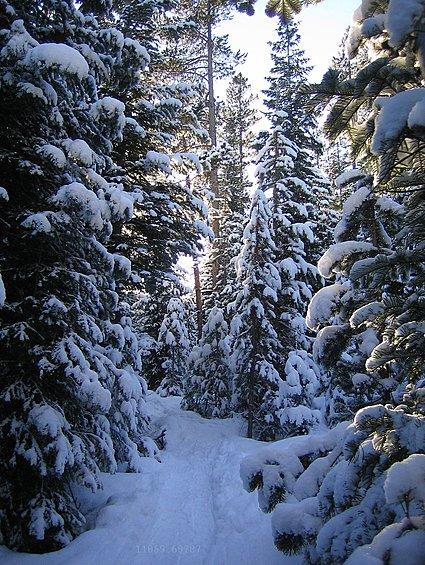 11059.698-Snowshoeing.jpg