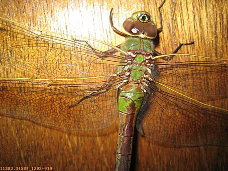 11383.346-Big_Insect.jpg