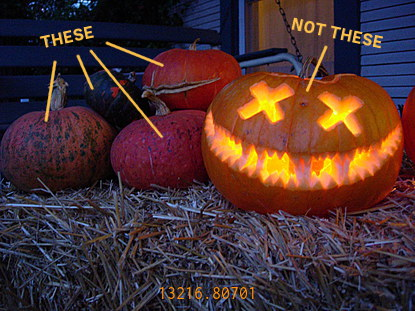 13216.807-pumpkins_and_squash.jpg
