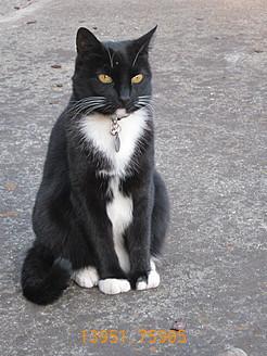 13951.759-cat_tax.jpg